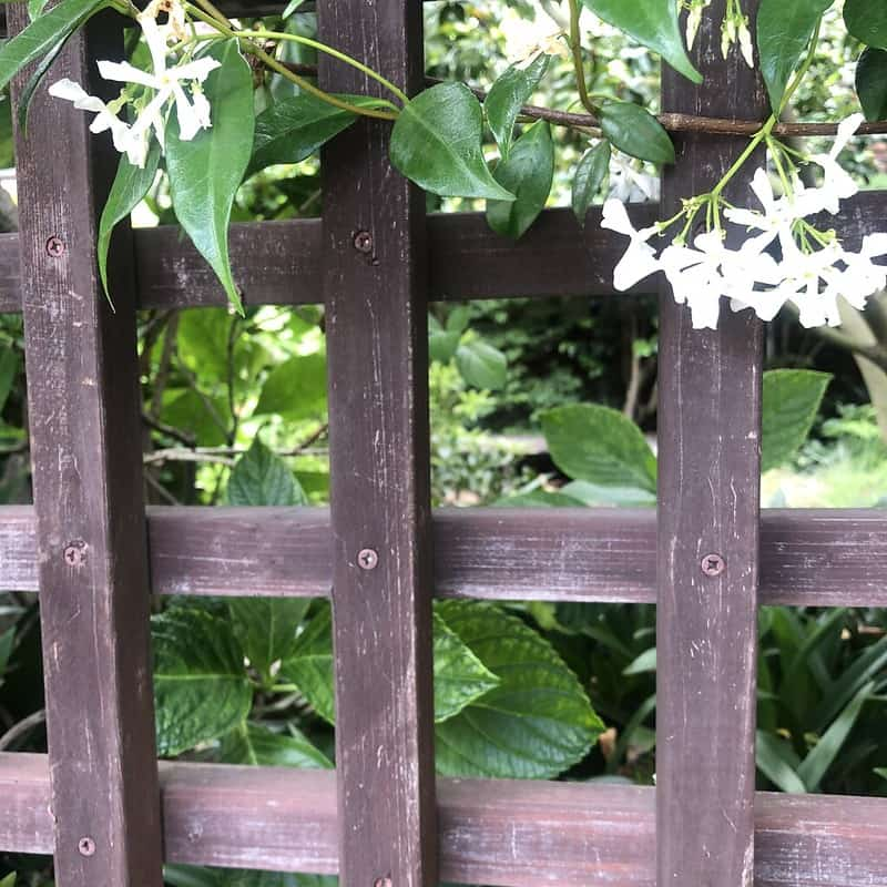 9 Trellis Wall Planter