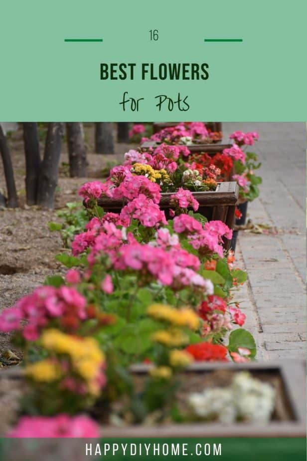 Best Flowers for Pots 1