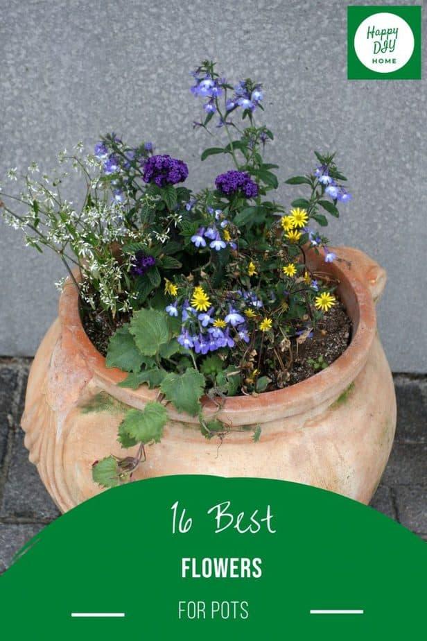 Best Flowers for Pots 2