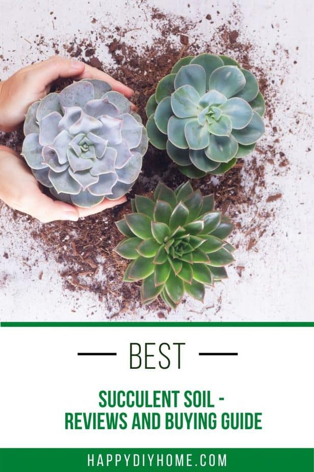 Best Succulent Soil 1