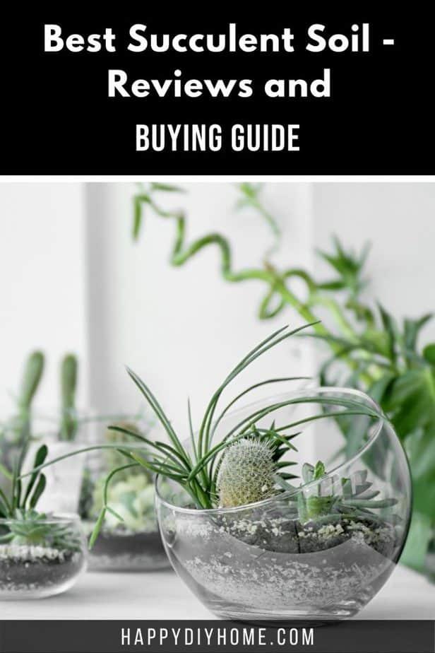Best Succulent Soil 2