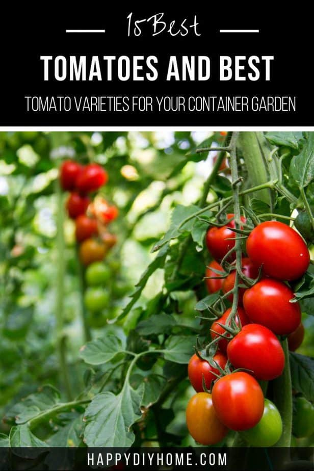 Best Tomatoes 1