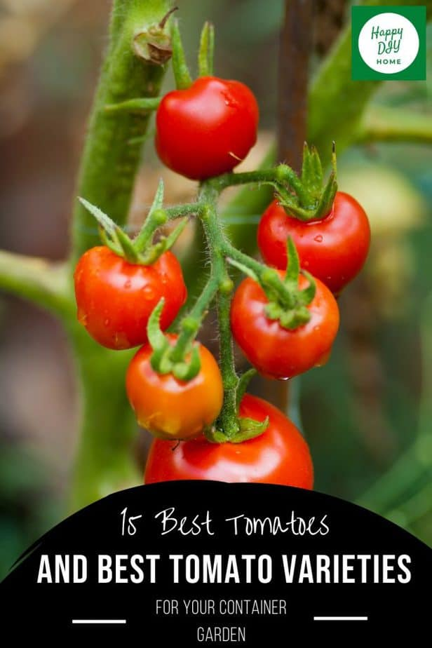 Best Tomatoes 2