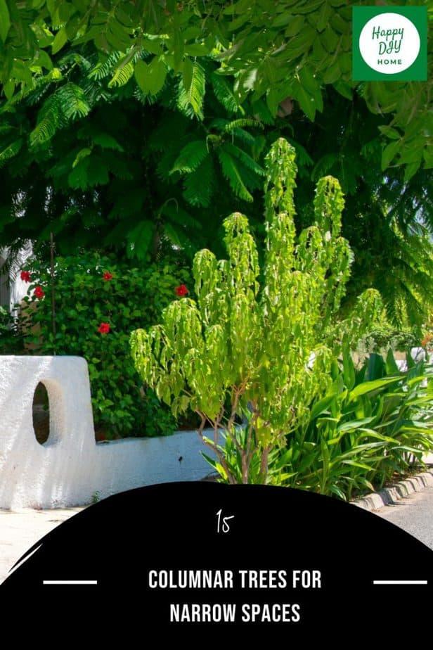 Columnar Tree 2