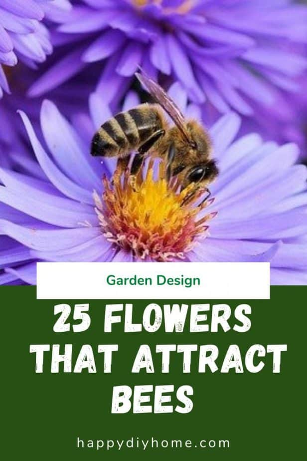 Flowers that attract bees 1