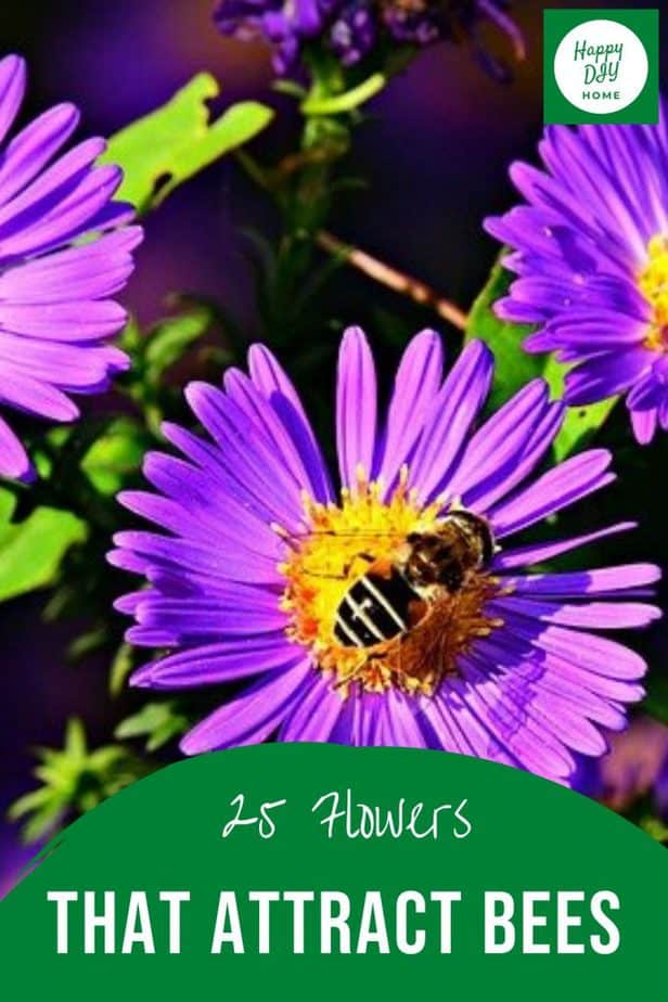 Flowers that attract bees 2