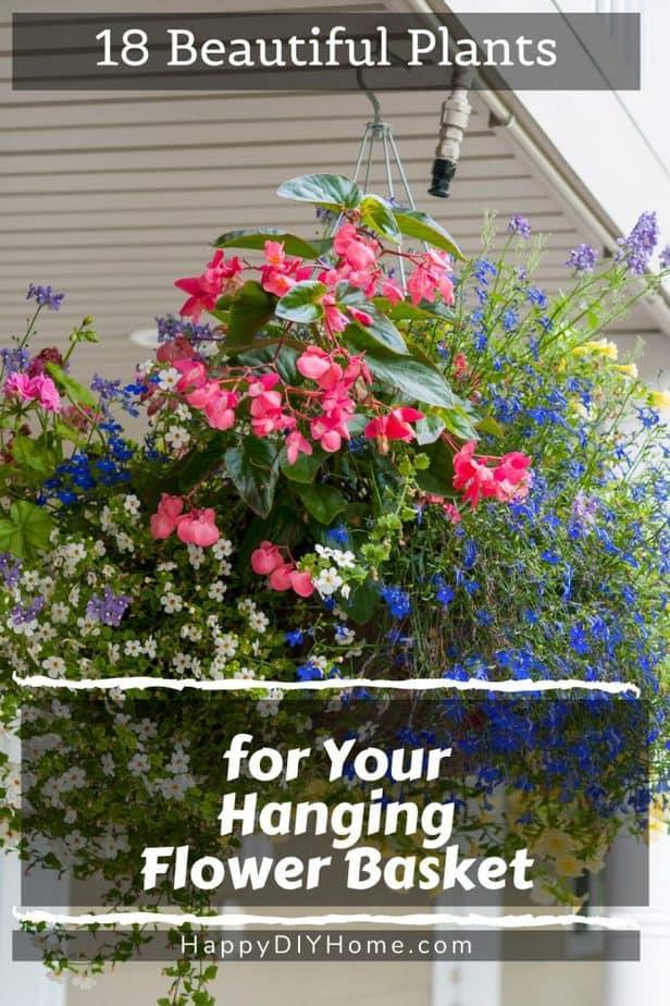 Hanging Flower Basket 1