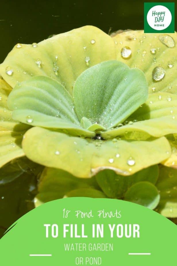 Pond Plants 2