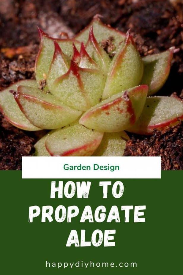 Propagate Aloe 1