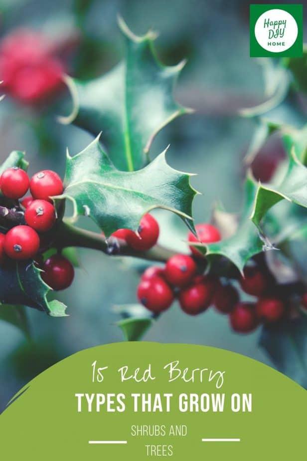 Red Berries 2