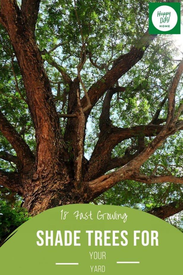 Shade Trees 2