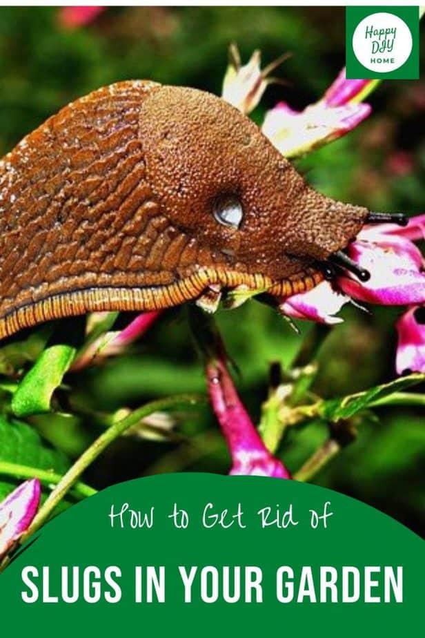 Slugs in Garden 2