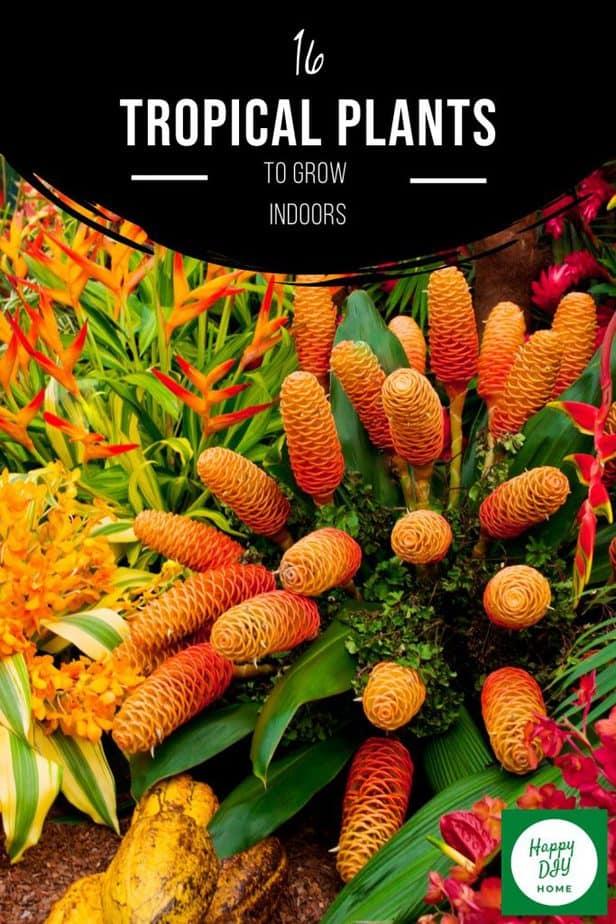 Tropical Plants 2