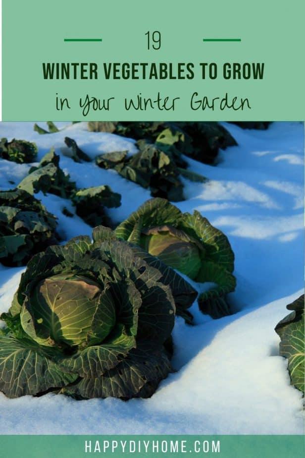 Winter Vegetables 1