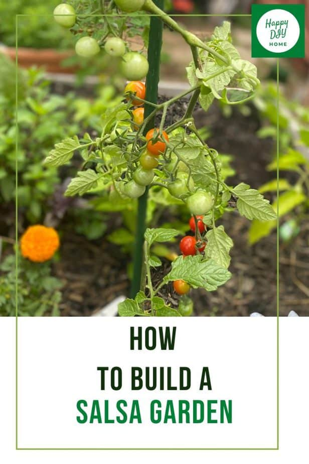 how to grow salsa garden 1