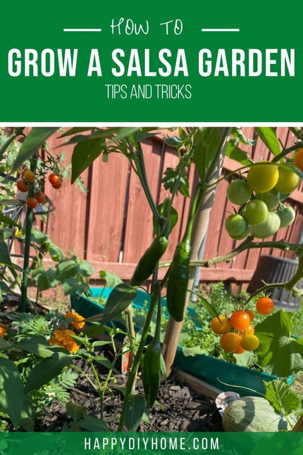 how to grow salsa garden 2