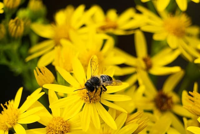 1 A beneficial insect