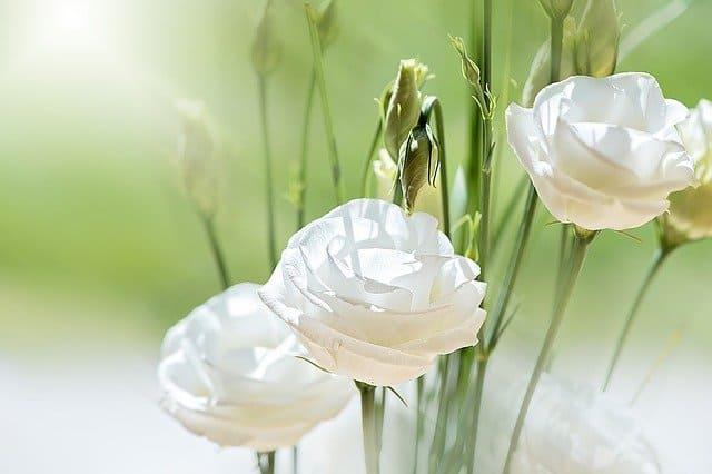 1 Rose like flowers