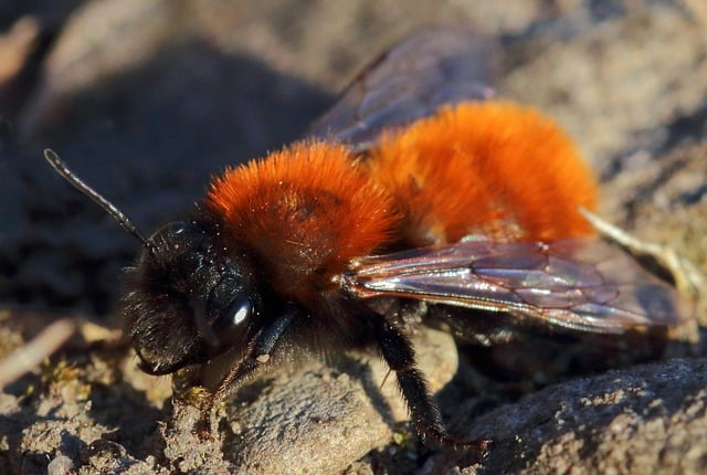 2 Bees arent just stripey