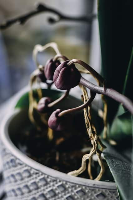 2 Root condition tells you when to repot