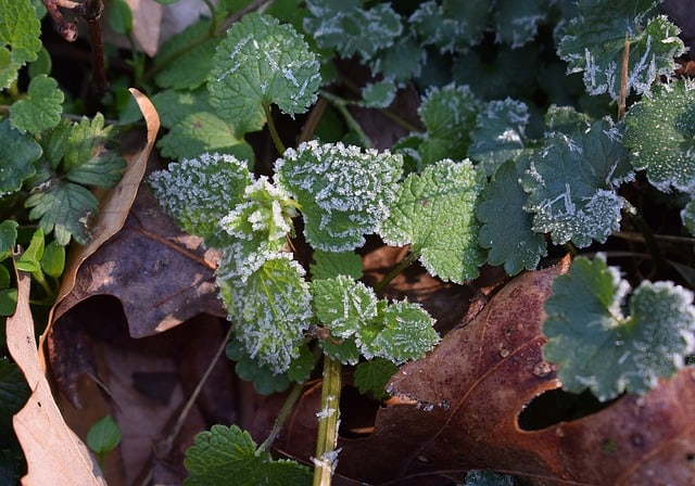 2. Frost on leaves