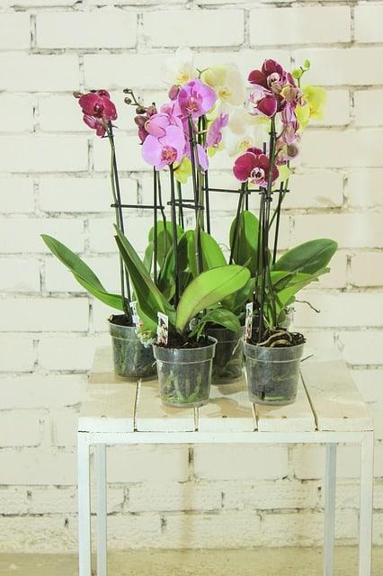 3 Plastic plant pots