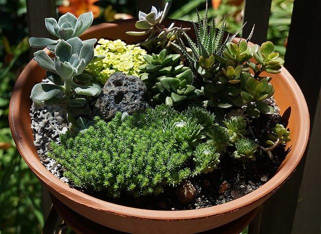 4 Dont overcrowd plants