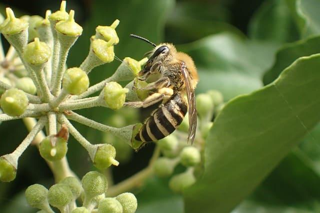 4 Encourage pollinators to the garden