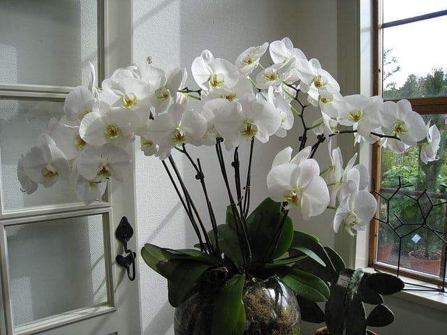 4 Repotting orchids is straightforward