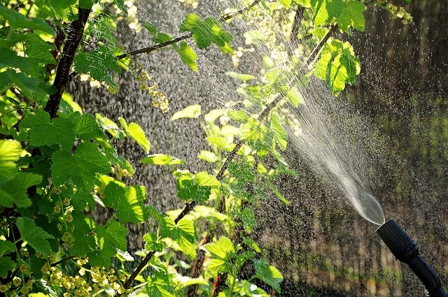 4 Spray plants evenly