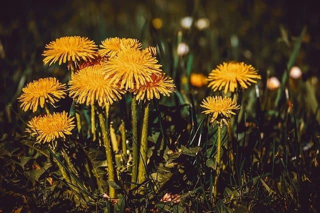 5 Weeds can smother plants