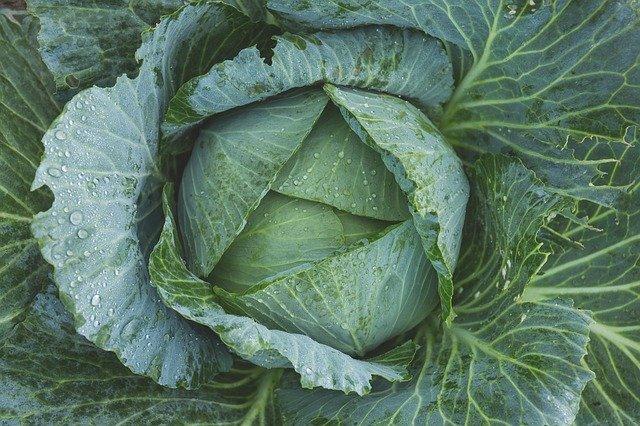 6 Check foliage for pests