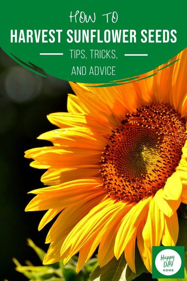 8. Sunflower Cover Image