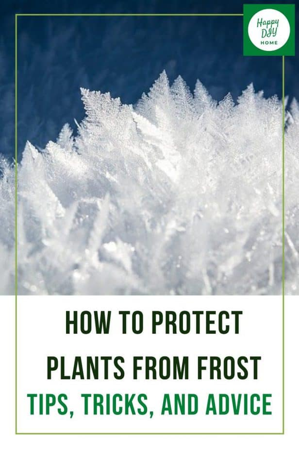 9. How to Protect Plants from Frost