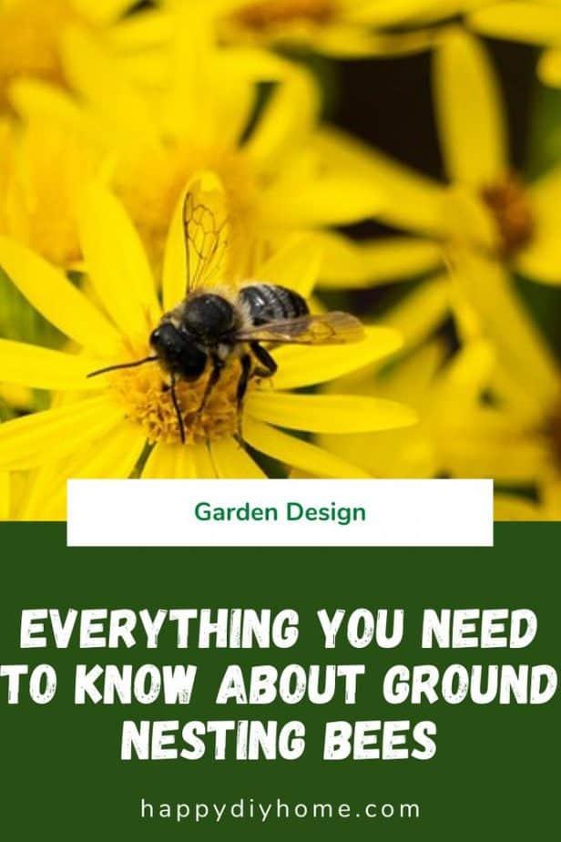 Ground Nesting Bees 1
