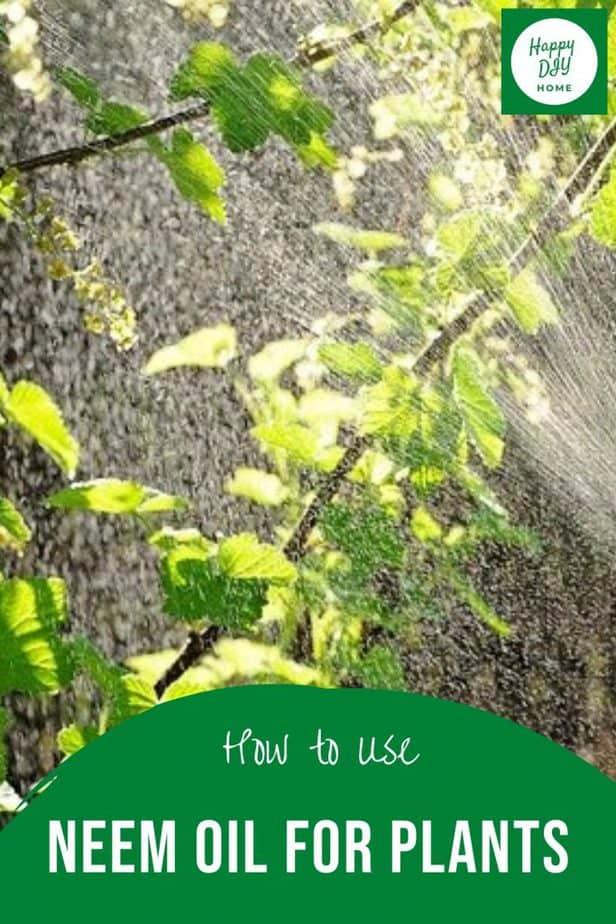 Neem oil for plants 2