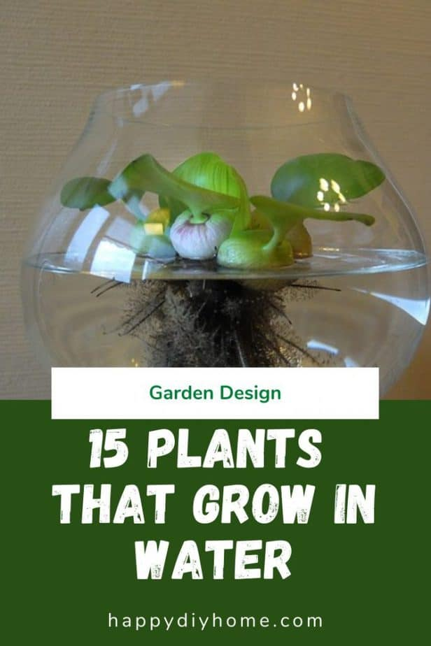 Plants that grow in water 1