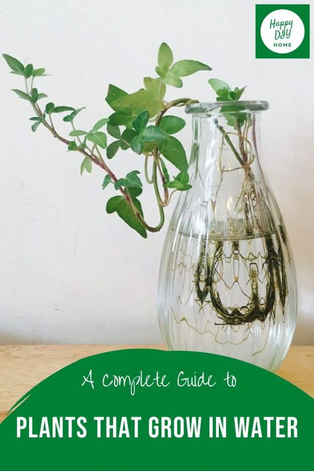 Plants that grow in water 2