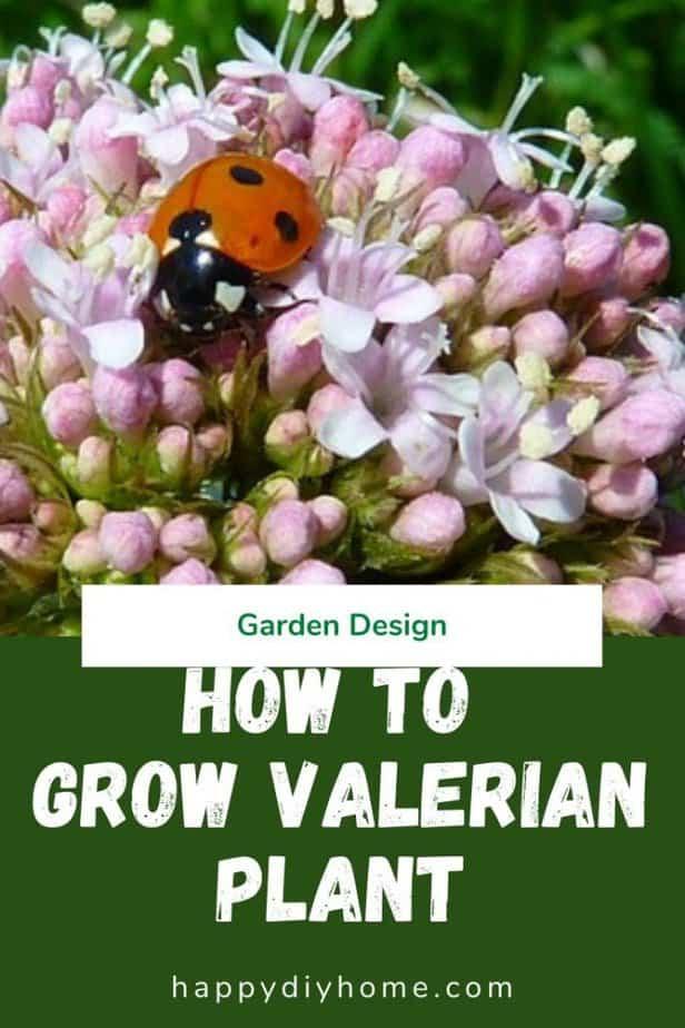 Valerian Plant 1