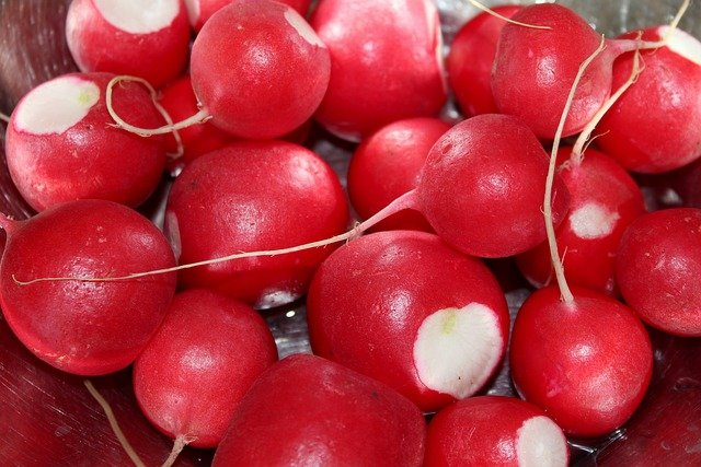 1 When to harvest radishes