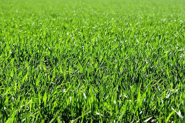 1 When to mow new grass