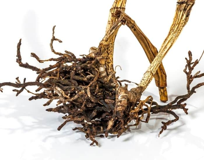 12. roots that are brown ironwood