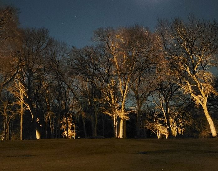 14. adding uplights to trees ironwood