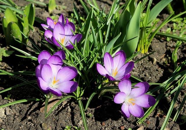 2 Flowers emerge in fall