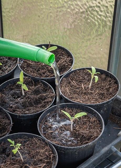 3 Gently water seedlings
