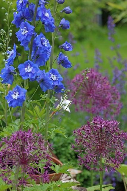 5 Mixed flower garden