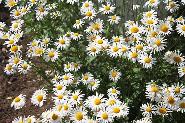 5 Weed around plants