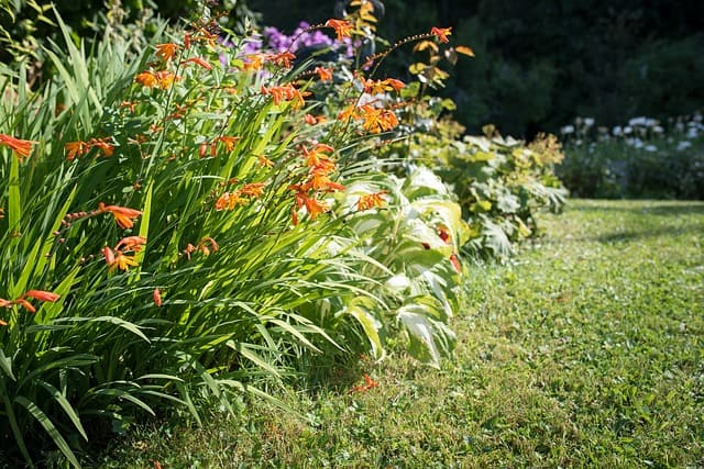 6 Good in mixed flower beds