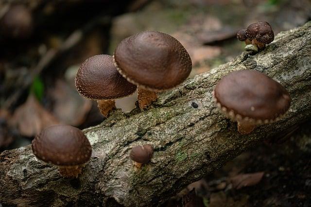 7 Mushrooms grow on trees