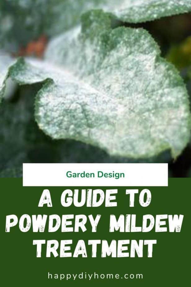 Powdery mildew 1
